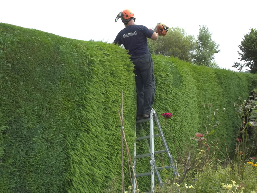 Ken on ladder hedge trimming, Withleigh